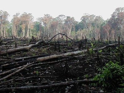 Deforestation - Lacanja_burn_crop,resize